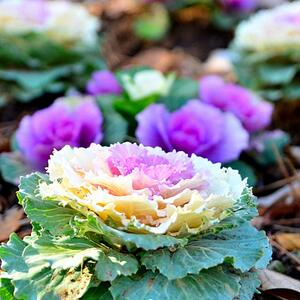 7 Plants To Keep Your Florida Panhandle Landscape On Trend For Autumn