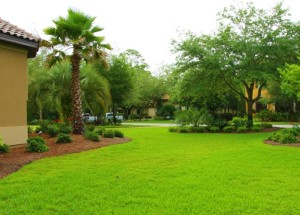 florida professional lawn mowing services