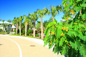 commercial landscape design and installation Panama City Beach Florida