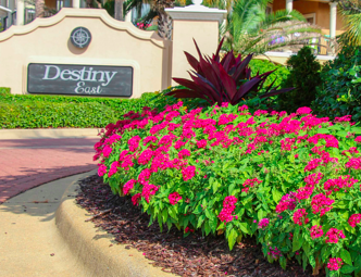 Annuals vs perennials which is right for your landscape pentas are one of many annuals in florida mightylinksfo