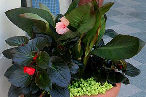Container gardens in Florida landscapes