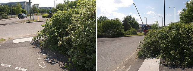 overgrown shrubs and hedges can be dangerous for drivers and pedestrians on commercial properties