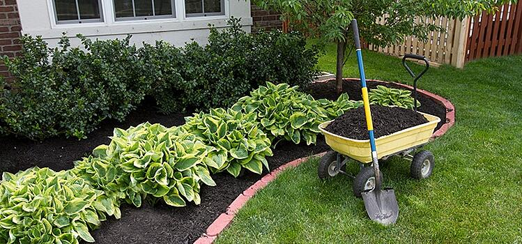 Using Mulch to Control Weeds