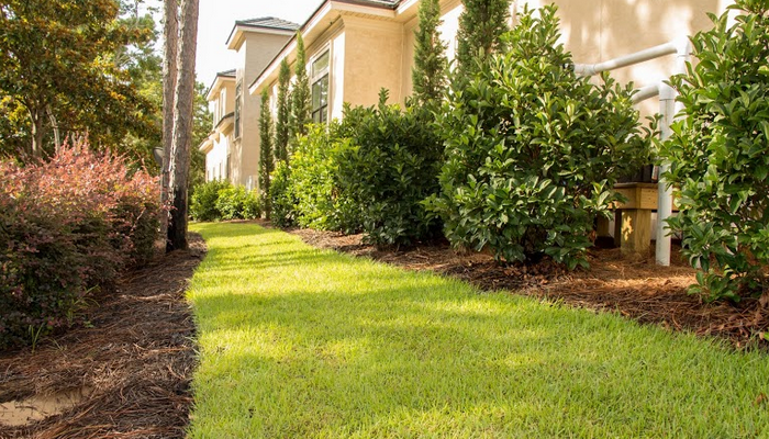 mature plants in this Sandestin landscape give the home a truly lived-in look