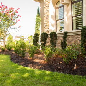 using mature plant material give Florida landscapes an established look