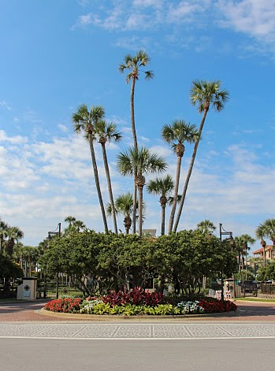 palm tree removal costsl can vary on tree size and location