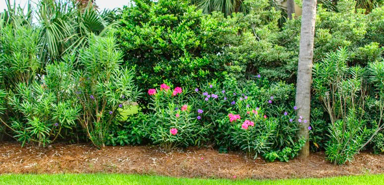 for a softer edge, supplement your natural privacy fence plantings with a planting bed