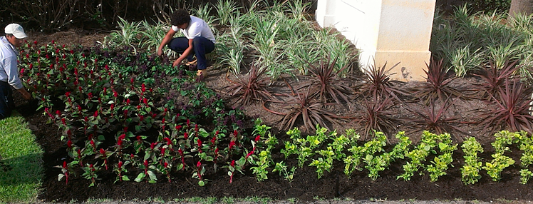 When GreenEarth installs landscaping, they give a one year guarantee if they also do the maintenance.